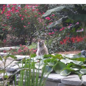 New Garden Nursery Greensboro Nc Photograph Have A Gar